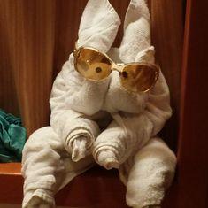 mystery towel animal lol