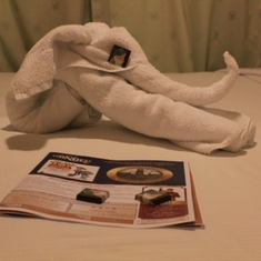 Towel animal!