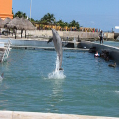 You can watch the dolphins at Costa Maya for free!
