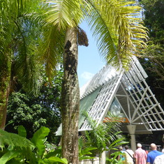 Rain Forest - El Yunque National Park Visitor Center