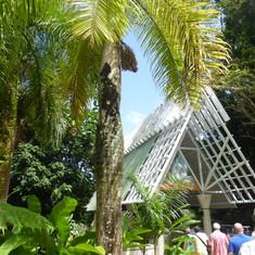 Rain Forest - El Yunque National Park Visitor Center
