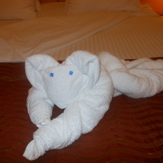 towel animals on the bed every day
