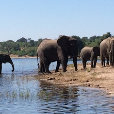 Elephants Galore