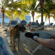 Relaxing on a beach at Grand Turk with wild but friendly dog