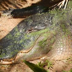We're from Florida, so Go Gators!! Beat FSU, GA, TN, 'Bama, KY, USC, Auburn, etc