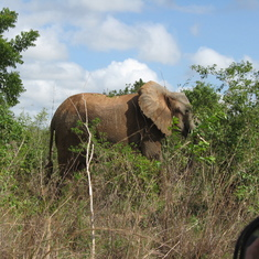 Kenya---Elephants and more elephants--everywhere.