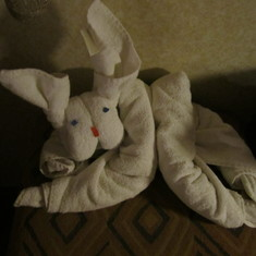 Fun towel animals in rooms daily!