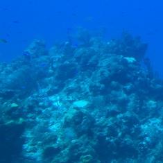 Atlantis Submarine - Cozumel