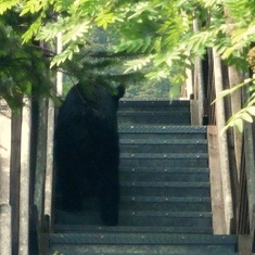 Stairs for bears in Juneau!