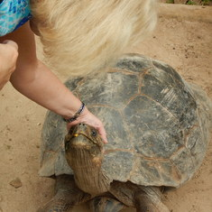 Can't believe I'm petting a Galapogos Tortoise who is almost as old as I am!