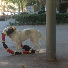 "Barcelona, Spain - Dog with a pet snake ""stuffie"" in Barcelona"