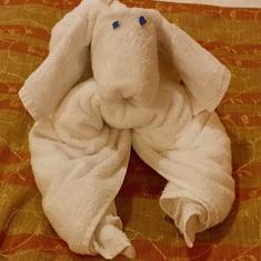 towel animals - dog