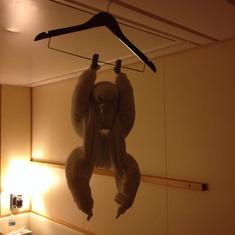A monkey on day 4!