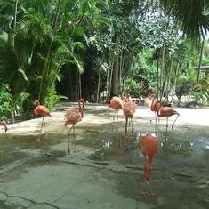 Nassau, Bahamas - Ardastra - Gardens, Zoo & Conservation Centre