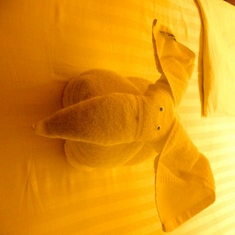 Elephant Towel Animals