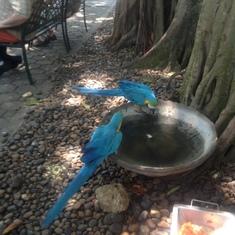 bueatiful birds free