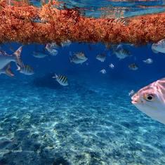 Playa Azul - Cozumel, Mexico